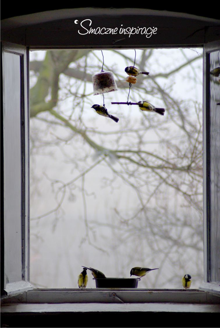 10_ Dokarmianie ptaków