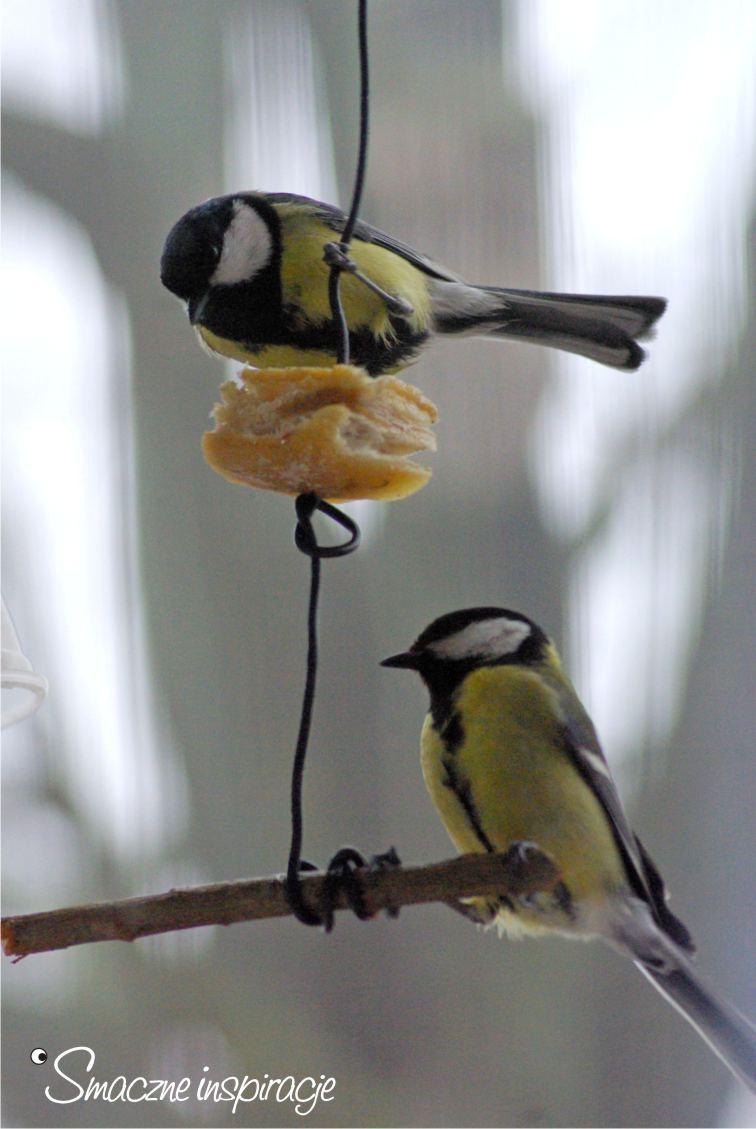 2_ Dokarmianie ptaków