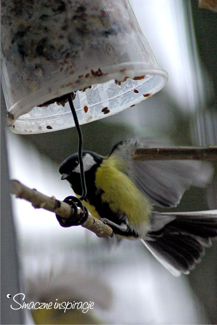4_ Dokarmianie ptaków