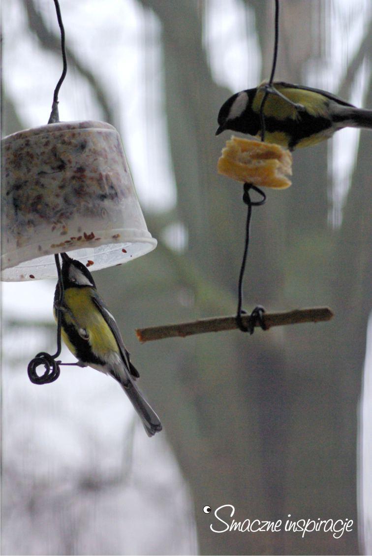 5_ Dokarmianie ptaków