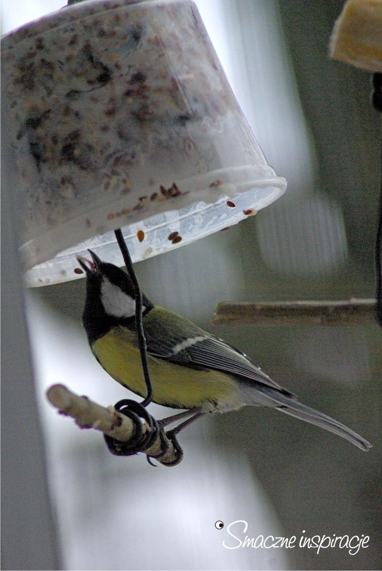 7_ Dokarmianie ptaków