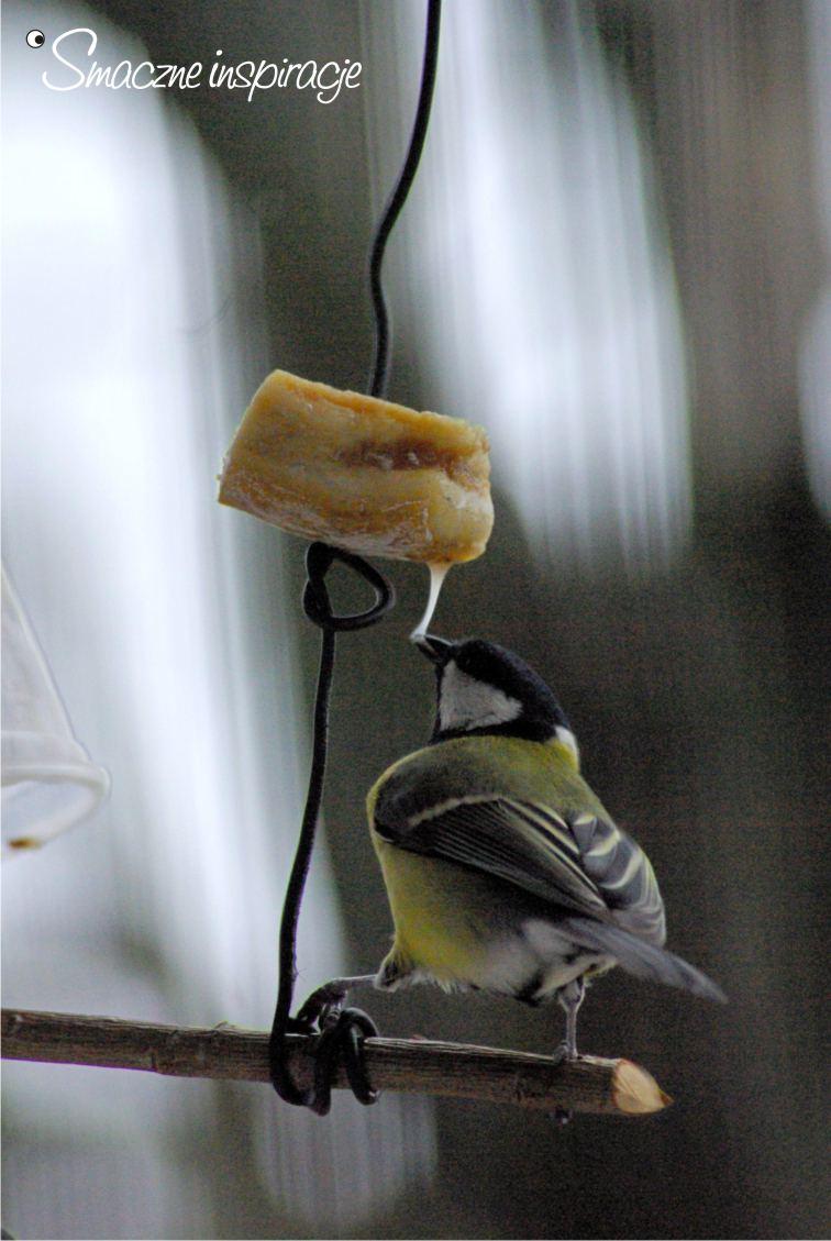 9_ Dokarmianie ptaków