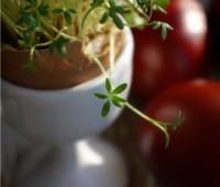 Uprawa rzeżuchy w skorupkach jaj