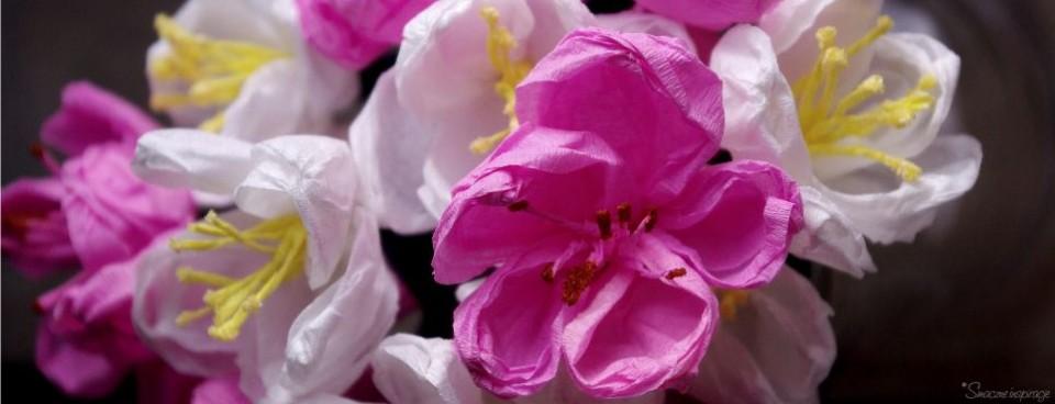 Jak zrobić kwiaty jabłoni i śliwowiśni z bibuły? – instrukcja wykonania